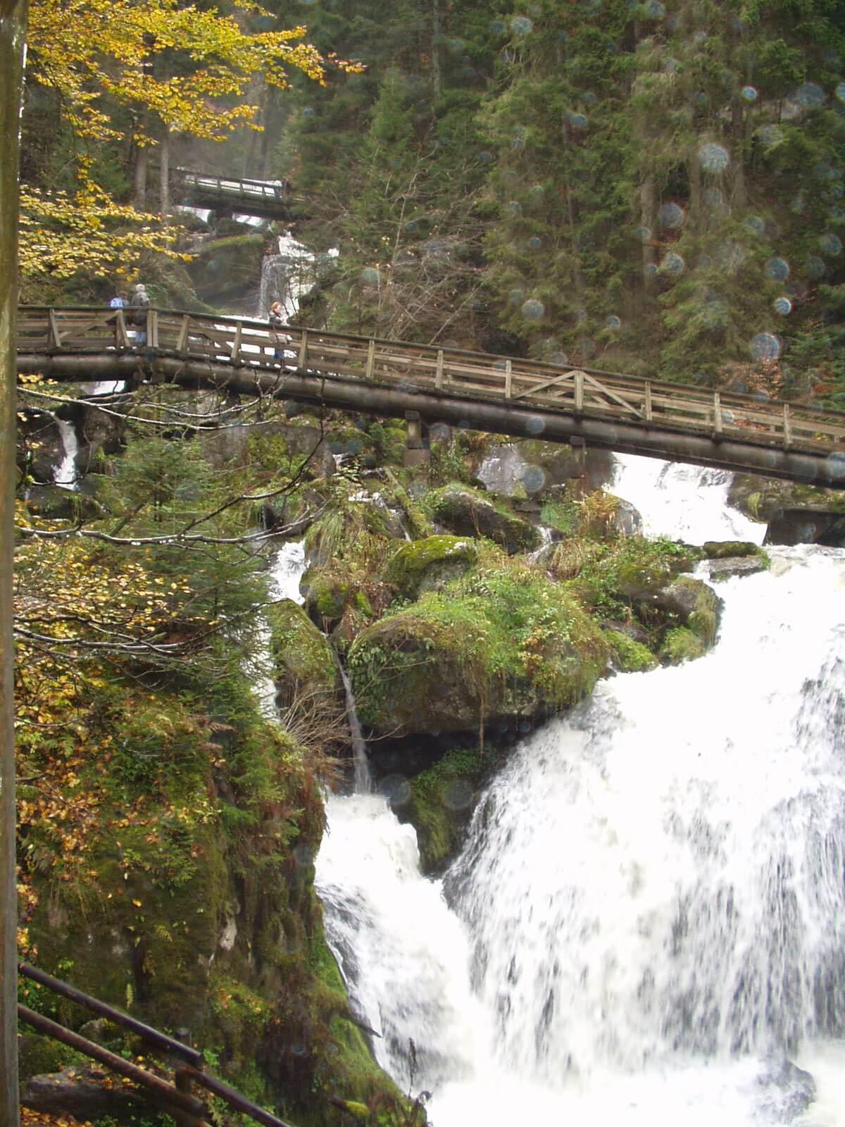 Der Wald in Triberg
