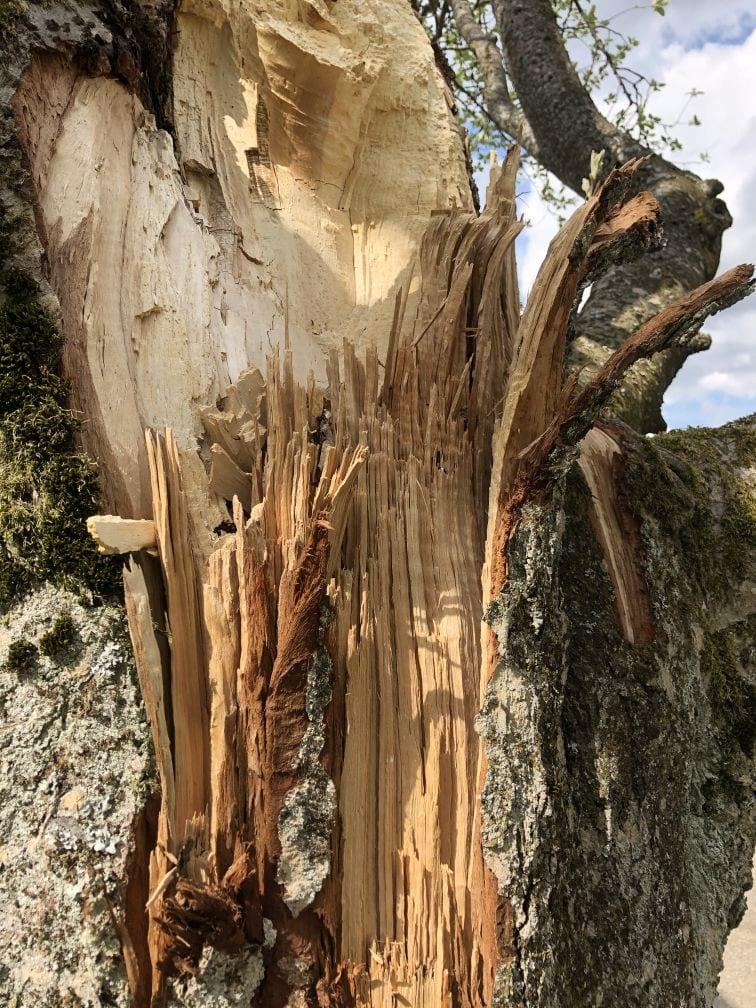 Verletzter Baum